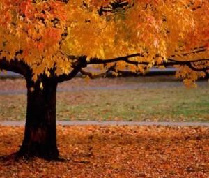 Columbus Ohio Leaf Removal